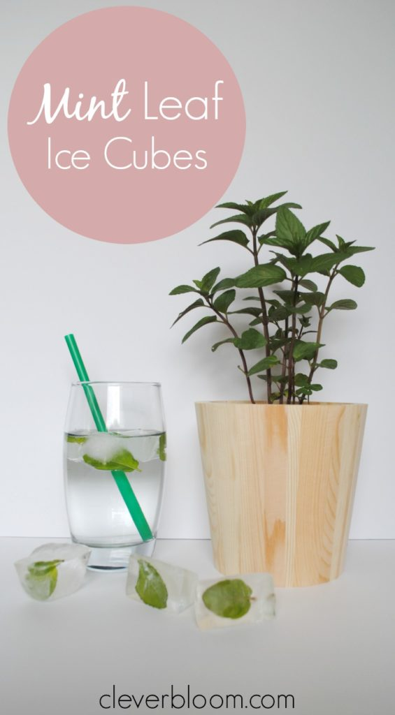 Add a gorgeous and refreshing element to any beverage with Mint Leaf Ice Cubes. Perfect for any time of year but amazing for those hot summer days!