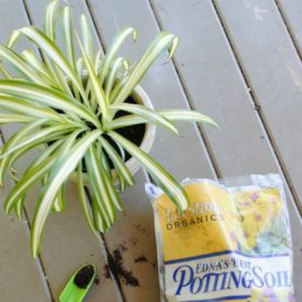 How to Re-Pot a Houseplant