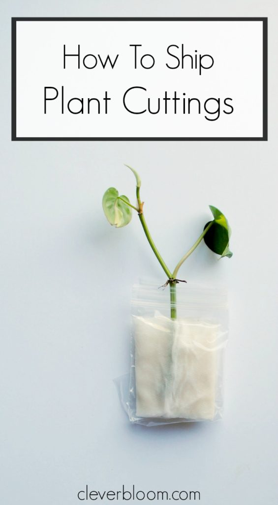 How To Ship Plant Cuttings - Clever Bloom