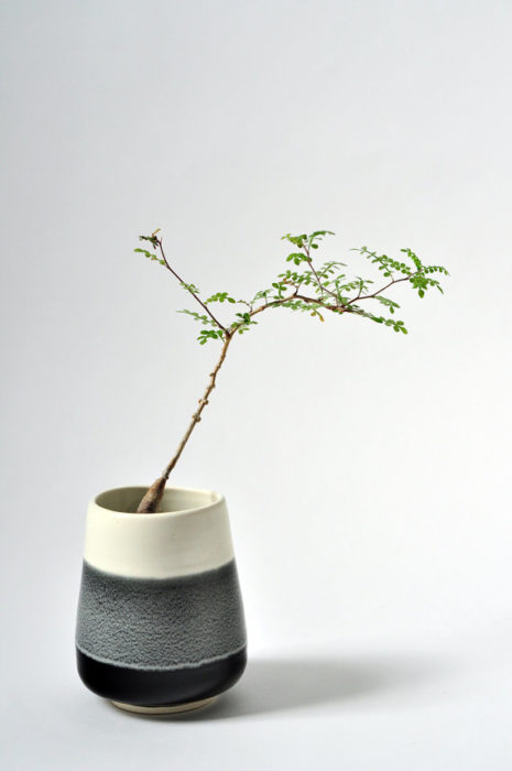Plant Lovers Gift Guide - Clever Bloom