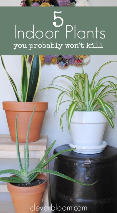 Create your own indoor jungle and improve your air quality with these 5 easy to care for plants.