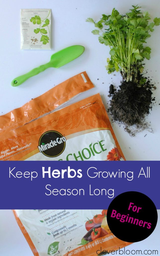 How to Keep Herbs Growing All Season Long (in a container). For Beginners!