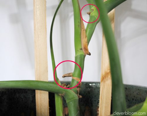 Rooting Plant Cuttings In Water- cleverbloom.com