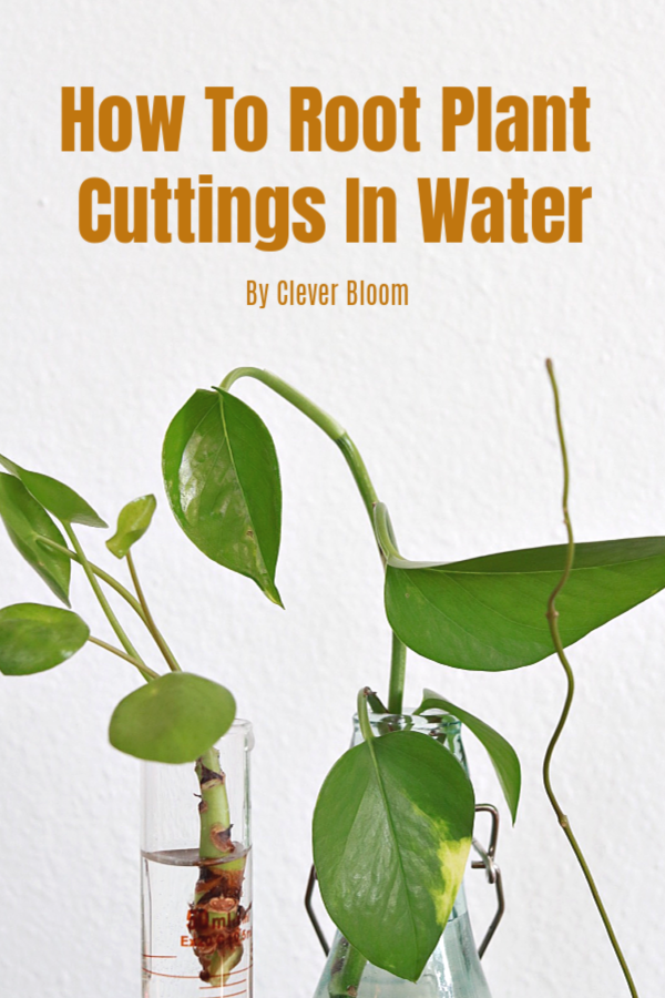 How to Root Plant Cuttings in Water - Clever Bloom
