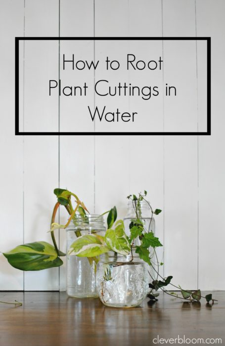 How to Root Plant Cuttings in Water- cleverbloom.com