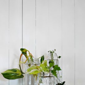How to Root Plant Cuttings in Water