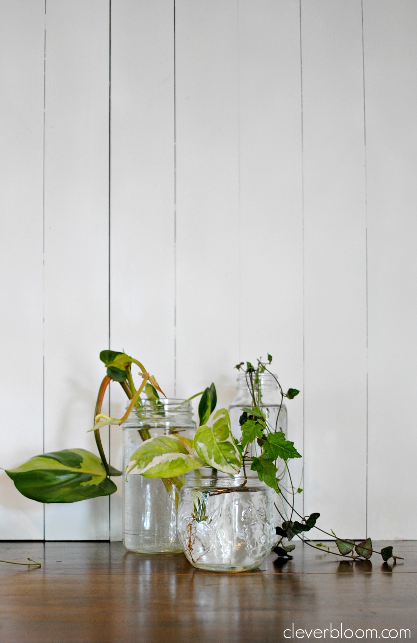 How to root plant cuttings in water clever bloom floridaeventfo Choice Image