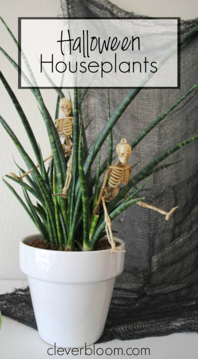 Halloween Houseplants - Simple decor inspiration for Halloween - Clever Bloom