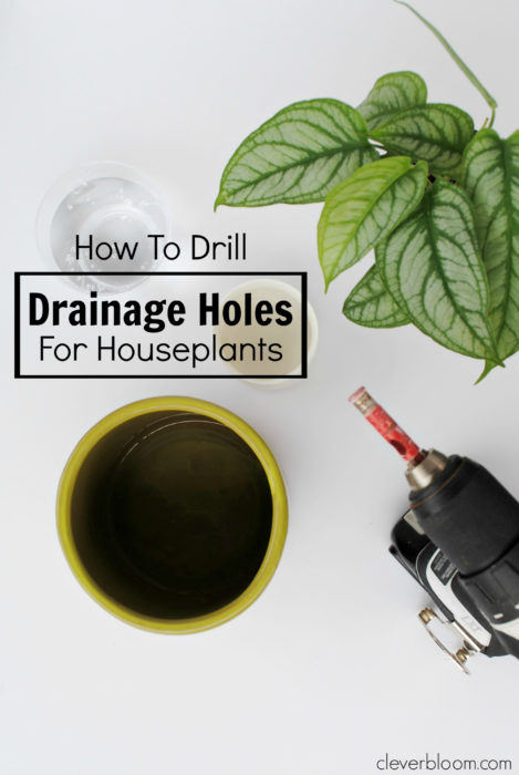 Learn How to Drill Drainage Holes for Houseplants in all of your thriftstore finds - Clever Bloom