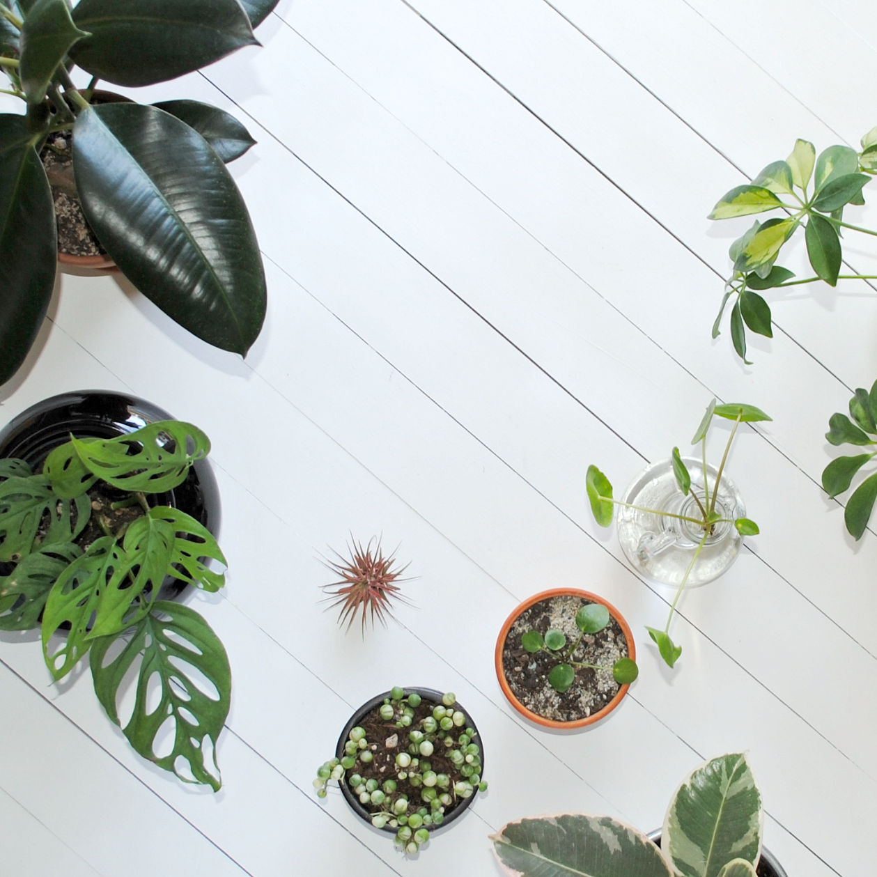 Best Houseplant Care Tips