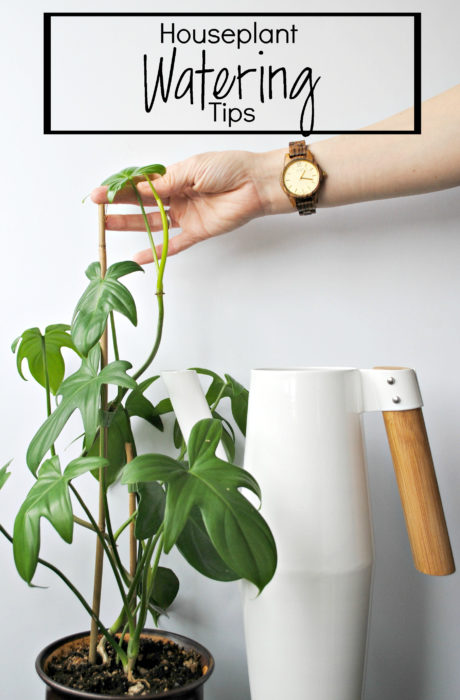 Houseplant Watering Tips - Clever Bloom