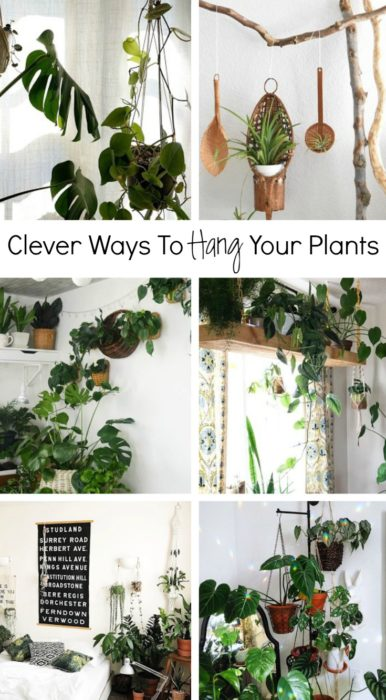 Clever ways to hang your plants clever bloom - How to hang plants in front of windows ...