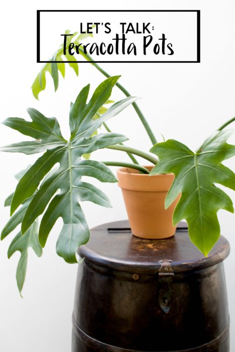 Learn all about terracotta pots including pros/cons and what plants can be housed in them - Clever Bloom #terracotta #plantlady #houseplants #plants