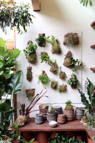 Pretty Plants, Cool Places and Friends - An update from Clever Bloom