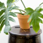 Let's Talk: Terracotta Pots