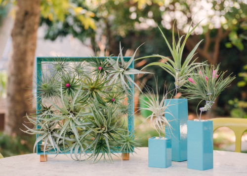 Plant Lover Gifts - Airplant Frame from Airplant Man