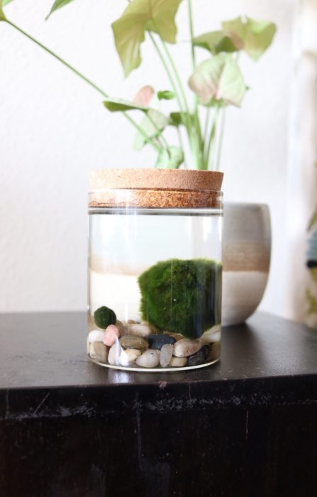 Plant Lover Gifts - Marimo Ball Kit from Horti & More!