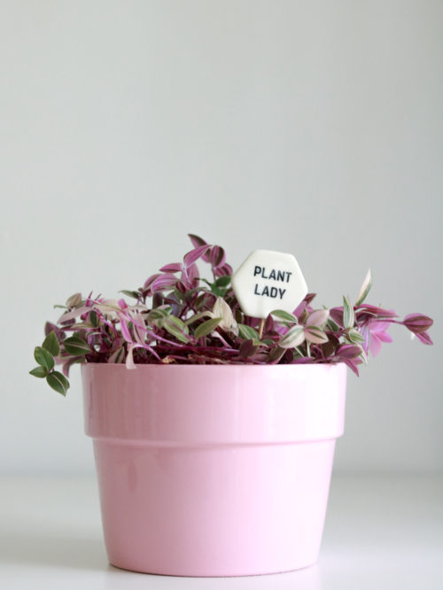 Plant Lover Gifts - Plant Pokes by Her Name Is Mud