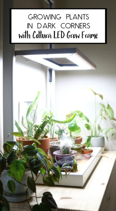 Check out this sleek, modern, Coltura LED Grow Frame - Perfect for Growing Plants in Dark Corners #ad #sponsored #lovegardeners #led #growlights #plants #indoorplants #plantlady