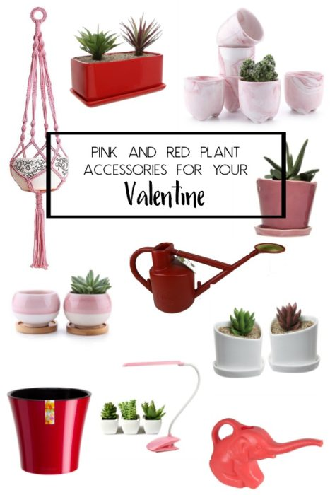 Looking for a gift for your Plant Loving Valentine? Look no further! Here are some adorable pink and red accessories for your Valentine. #valentine #valentinesday #heart #red #pink #planters #houseplants #accessories #indoorplants #urbanjunglebloggers #houseplantclub