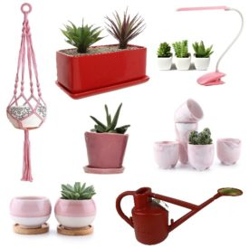 Pink and Red Plant Accessories for Your Valentine