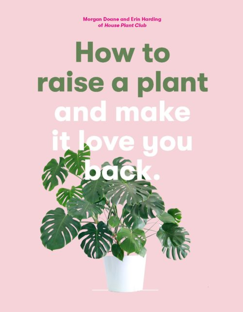 How to Raise a Plant and Make it Love You Back - Clever Bloom