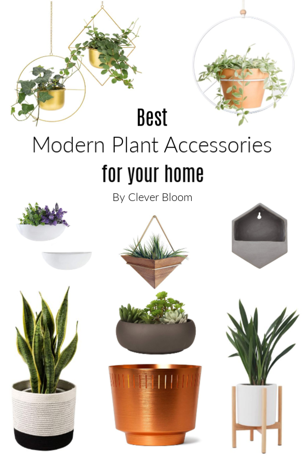 Best Modern Plant Accessories For Your Home