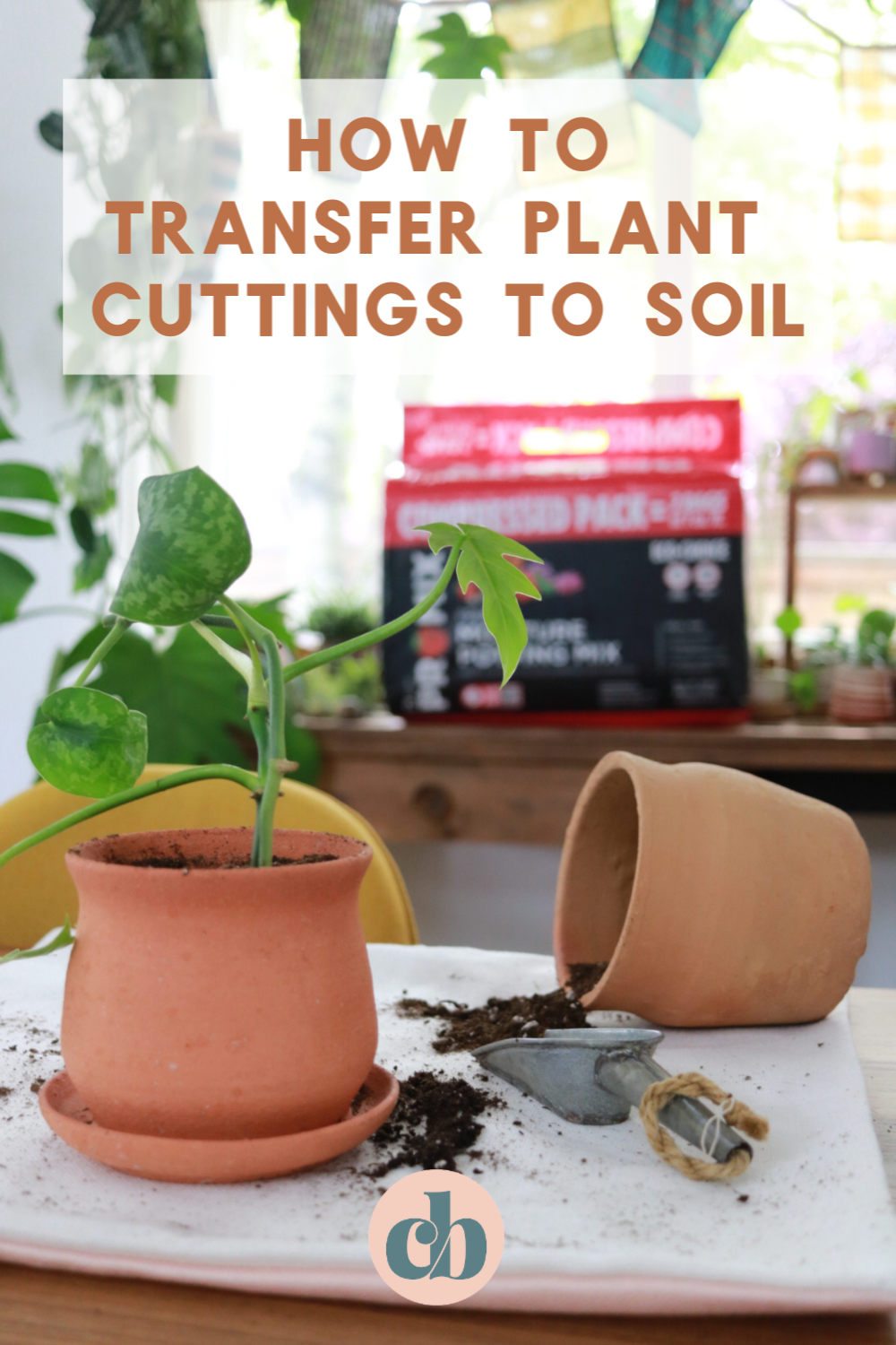 Transfer Your Cuttings To Soil How When